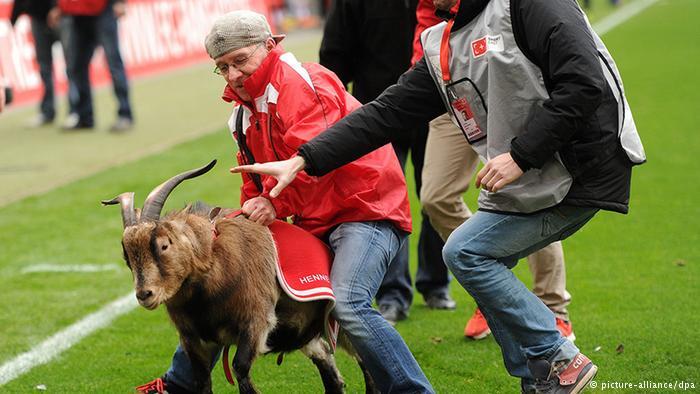 هروب الماعز في أرضية الملعب خلال المباراة